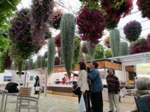 当事者に花や葉を触ってもらいながら説明をしているガイドヘルパーの写真